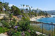 The Laguna Beach Shoreline Seen From a View Point in Heisler Park