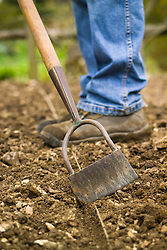 Using a Dutch hoe and garden line to make a drill for outdoor direct seed sowing in a vegetable garden