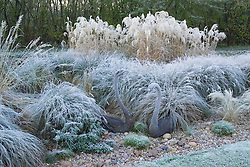 Bronze swan sculptures amongst grasses on a frosty morning in winter.  Design: John Massey, Ashwood Nurseries