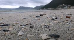 SOUTH AFRICA. Muizenberg. 25.08.18. Interesting sea shell on Muizenberg beach. Picture Ian Landsberg/African News Agency (ANA)