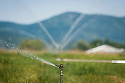 Sprinklers distribute water on a hay field in Post Falls, Idaho on Wednesday, July 7, 2010.