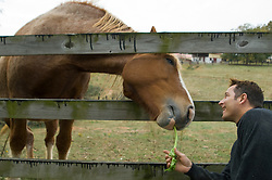 Man feeding a horse a stick of celery through a wooden fence