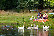 A couple feed swans and cygnets whilst enjoying a picnic on the banks of the River Cam, Cambridge, United Kingdom.