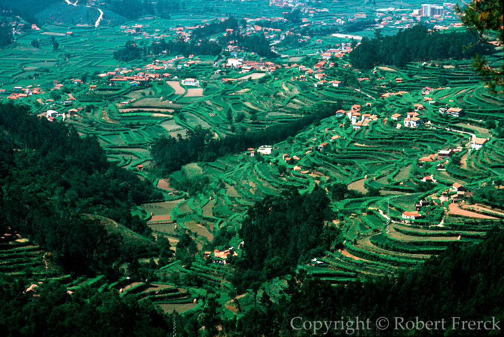 PORTUGAL, NORTH, AGRICULTURE farms and vineyards near Vale de Cambra
