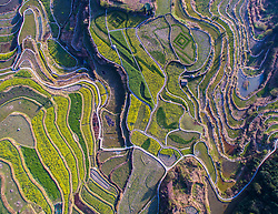 Designed patterns are seen amid rape blossoms in the terraced fields in Xiaozhoushan Township of Qingtian County, east China's Zhejiang Province, March 29, 2016. EXPA Pictures © 2016, PhotoCredit: EXPA/ Photoshot/ Xu Yu<br /> <br /> *****ATTENTION - for AUT, SLO, CRO, SRB, BIH, MAZ, SUI only*****
