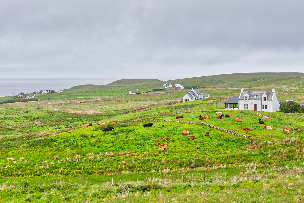 Cottage and cows on green landscape, Isle of Skye, Scotland, UK