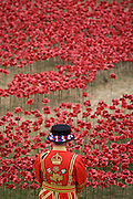 Marking the centenary of the beginning of the First World War (WW1) in 1914, a Tower of London Beefeater stands among some of the 888,246 ceramic poppies - one for each British military death - created by artist Paul Cummins. Remaining in place until the date of the armistice on November 11th. Across the world, remembrance ceremonies for this historic conflict that affected world nations, London saw many such gestures to remember the millions killed in action at the beginning of the 20th century.