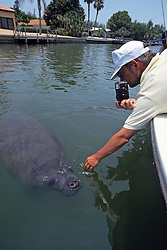 Manatees With Person