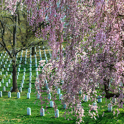 Washington, DC, USA - April 11, 2013: Rows of military tombstones in springtime at the Arlington National Cemetery.