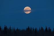 The full moon rises along the Tanana River in Nenana, Alaska on April 7, 2020.