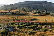 Cevennes. landscape  Mount Lozere    France