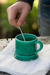 Sowing parsley seeds - stirring seeds in hot water