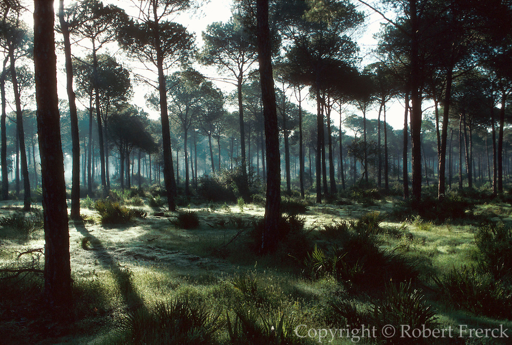 SPAIN, ANDALUSIA La Doñana National Park pines