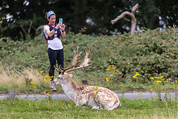 Licensed to London News Pictures. 01/09/202. London, UK. Visitors enjoy the red deer grazing in the autumnal golden brown grass in Richmond Park, south-west London today on the first day of Meteorological Autumn. Weather forecaster have predicted very warm weather for the weekend and next week for the South East, with temperatures in excess of 27c expected. Photo credit: Alex Lentati/LNP