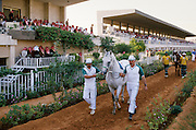 Horseracing at the Equestrian Club in Riyadh, Saudi Arabia