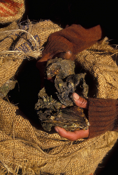 Stock photo of a person pulling fresh oysters from a burlap bag