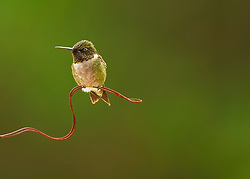 A Ruby-Throated Hummingbird from through a dirty window