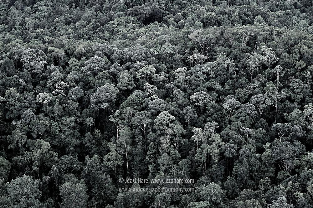 Rainforest, Riau, Sumatra, Indonesia.
