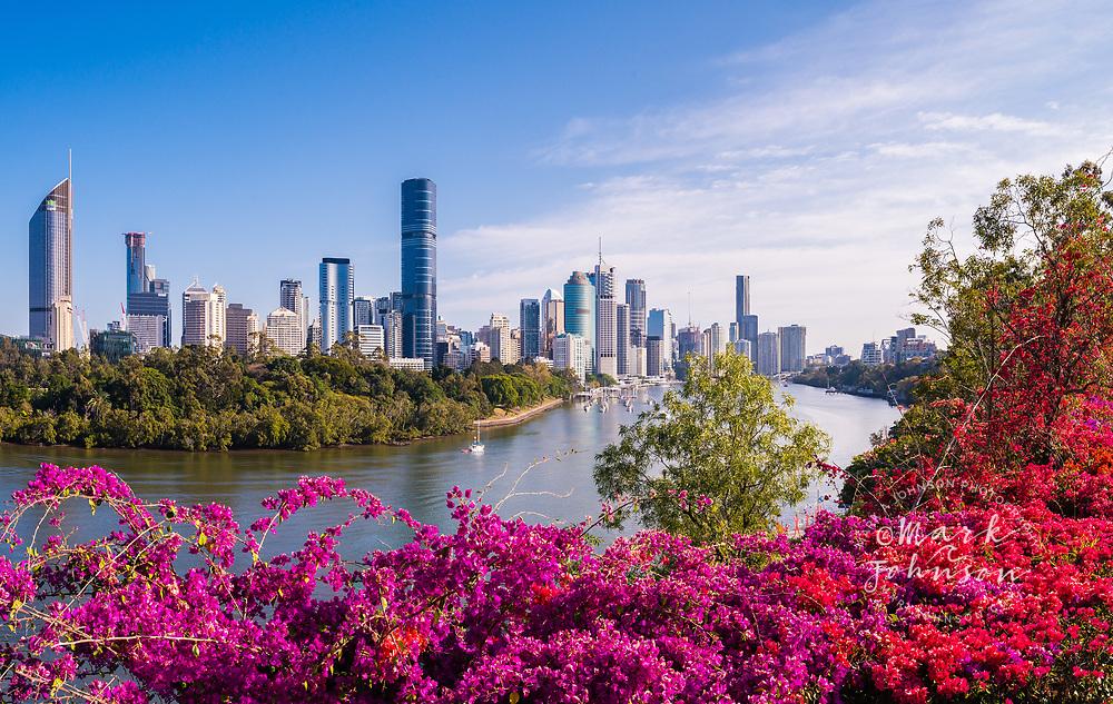 Blooming bougainvillea flowers & Brisbane skyline from the Kangaroo Point Cliffs, Queensland, Australia