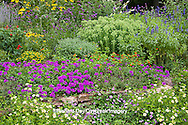 63821-19810 Flower garden with rock wall --Luscious Grape Lantana (Lantana camara) Luscious Lemonade Lantana (Lantana camara) Homestead Purple Verbena (Verbena canadensis)  Red Spread Lantana (Lantana camara) Victoria blue salvia (Salvia farinecea) Autumn Joy sedum  (Sedum spectabile) in Marion County IL