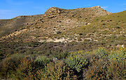 Semi desert scrub vegetation, Rodalquilar, Cabo de Gata natural park, Almeria, Spain