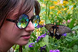 "© Licensed to London News Pictures. 05/09/2019. LONDON, UK. Esi, aged 17, a college student, wearing kaleidoscopic glasses views a butterfly at a ""Butterfly Biosphere"" in Grosvenor Square, Mayfair.  Setup by Bompas and Parr in association with King's College London and Butterfly Conservation, the aim is to make visitors more aware of the importance of pollinators and the ecosytem that the capital's 50 species of butterfly need to thrive.  The biosphere is open 5 to 15 September.  (Permission to photograph obtained) Photo credit: Stephen Chung/LNP"