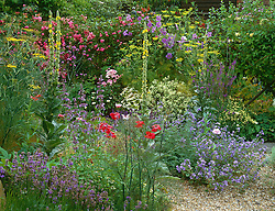 The gravel garden at Ketley's in high summer. Planting includes Malva sylvestris 'Primley Blue', Rosa 'Dorothy Perkins', Clematis 'Perle d'Azure', fennel and verbascums.
