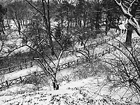Snow and rustic fences at Shakespeare Garden in Central Park