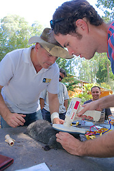 Sam Banks Checking Microchip Put In Mountain Brushtail Possum