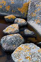 Lichen-covered rocks.<br /> Långviksskär, Stockholm Archipelago, Sweden