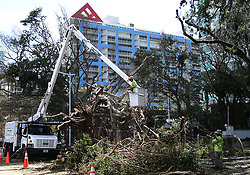 Workers clean up trees fallen at Brickell Avenue and 20th Street in Miami, after Hurricane Irma passed over South Florida, on Tuesday, September 12, 2017. Photo by Pedro Portal/El Nuevo Herald/TNS/ABACAPRESS.COM