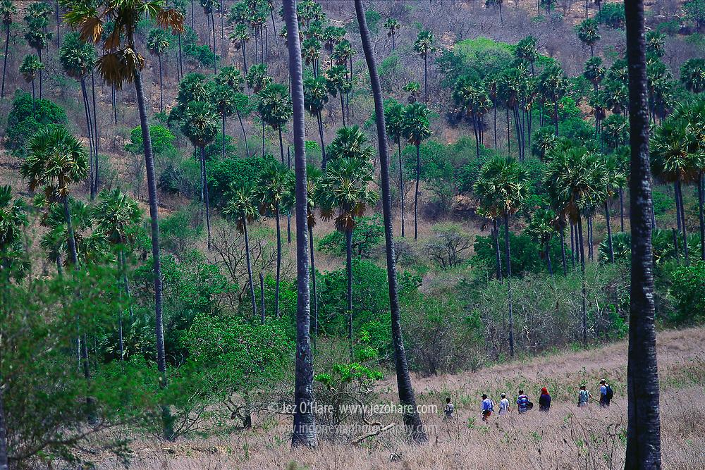 Trekking on Rinca Island, Komodo National Park, Manggarai Barat, Flores, East Nusa Tenggara, Indonesia.