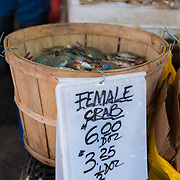 Female crab on sale in Chinatown fishmarket, New York, USA