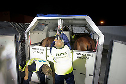 Exquis Nadine and Jerich parzival in the transport container<br /> Alltech FEI World Equestrian Games - Kentucky 2010<br /> © Dirk Caremans