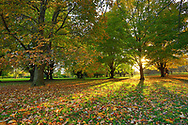 With fall colors at their peak, visitors stroll through Longenecker Horticultural Gardens at the UW-Madison Arboretum. The shades of autumn are made all the more brilliant in the late afternoon sun. Photo taken October 18, 2019.