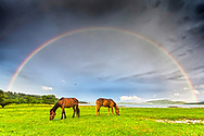 Rainbow over two horses by the lake