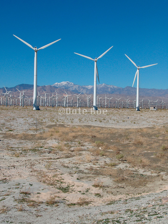 Field of windmills California USA.