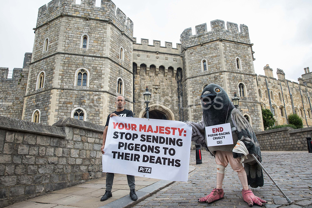 A bandaged giant pigeon on crutches is used by PETA activists to protest against pigeon racing outside Windsor Castle on 1st July 2020 in Windsor, United Kingdom. Animal rights charity PETA UK is calling on the Queen, who is currently isolating at Windsor Castle, to cut ties with pigeon racing following a PETA US investigation which revealed that all eight birds sent by the Queen to participate in the 2020 South African Million Dollar Pigeon Race SAMDPR died in quarantine and that fewer than a quarter of the birds from all over the world entered in the race subsequently complete it.