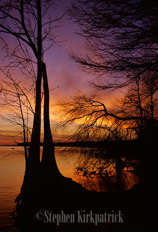 Winter sunset & cypress trees near Pearl River - Mississippi.