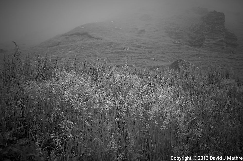 Misty Morning at the Drangshild Farm in Southern Iceland. Image taken with a Leica X2 camera (ISO 100, 24 mm, f/2.8, 1/60 sec). In camera B&W conversion. Nikonians Photo Adventure in Iceland with Mike Hagen and Tim Vollmer