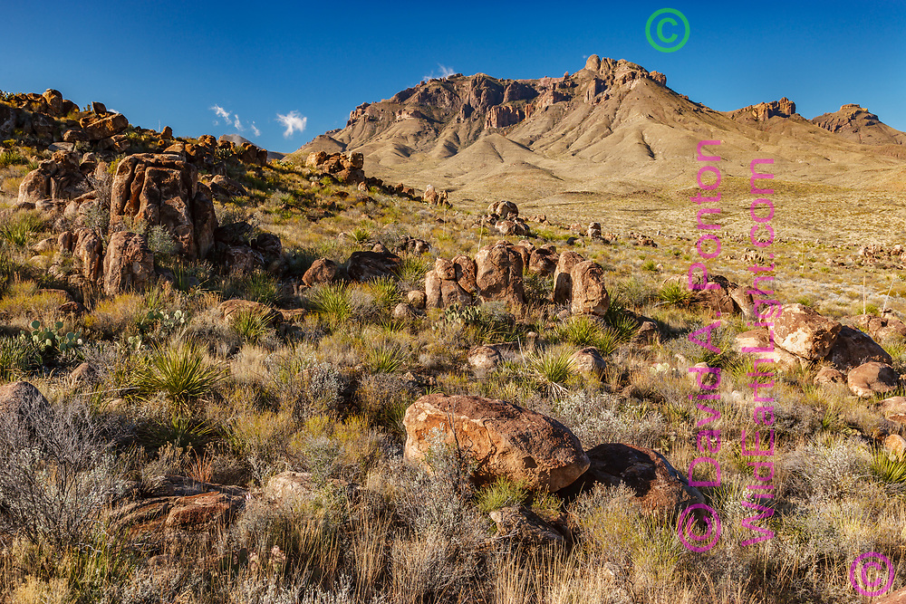 Chihuahuan Desert plants and rocks leading to the Chisos Mountains, Big Bend National Park, © David A. Ponton