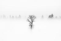 Valley fog settles into rural pastures at the mouth of Teton Canyon, Teton Valley, Idaho/Wyoming.