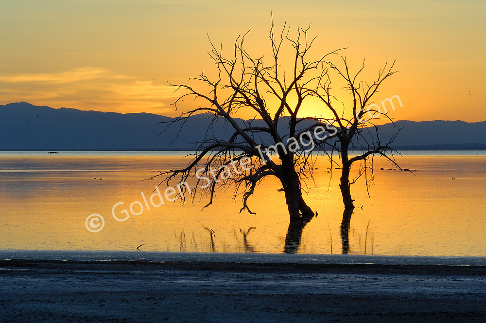 The Salton Sea Basin is an eight thousand square mile closed sub-sea level basin in the low desert of southern California. <br /> <br /> Up until 1905 the Salton Sea basin was a vast dry lake which had held water several times in the past thousand years. In 1905 after an abnormally heavy winter season of rainfall and then snowmelt the man made Imperial Valley dike was breached. The flow from the Colorado River took nearly two years to be controlled. The result was todays Salton Sea.  <br /> <br /> Dead trees are welcome perches to migratory birds who travel through the Salton Sea.
