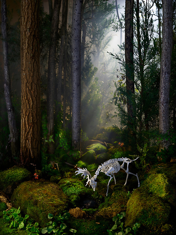 Acquiesce Exhibition images, hand crafted paper deer in living sets.
