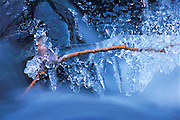ice-encrusted branch in winter creek, Icycle Creek, Leavenworth, Washington State