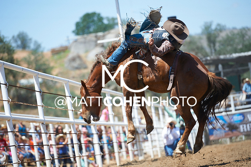 Bareback rider Tyson Thompson of Bradley, CA rides Gold Coast at the Woodlake Lions Rodeo.<br /> <br /> <br /> UNEDITED LOW-RES PREVIEW<br /> <br /> <br /> File shown may be an unedited low resolution version used as a proof only. All prints are 100% guaranteed for quality. Sizes 8x10+ come with a version for personal social media. I am currently not selling downloads for commercial/brand use.