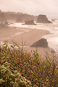 Otter Point State Park in Gold Beach, Oregon