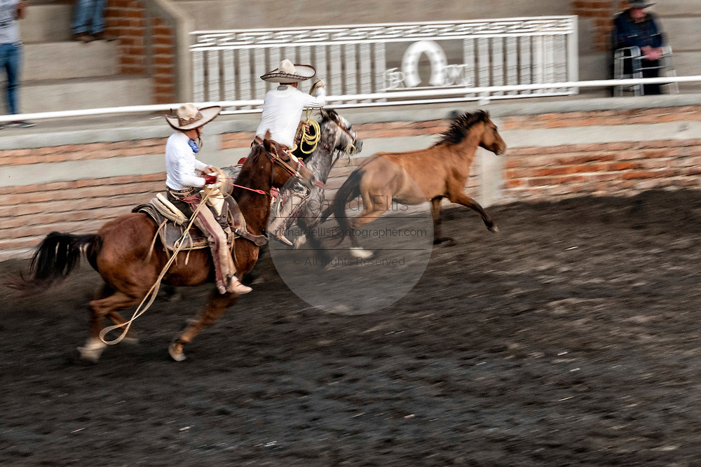 Members of the legendary Franco family of Charro champions chase a wild mare around the arena during a practice session in the Jalisco Highlands town of Capilla de Guadalupe, Mexico. The roping event is called Manganas a Caballo or Roping on Horseback and involves a charro on horse roping a wild mare by its front legs to cause it to fall and roll once.
