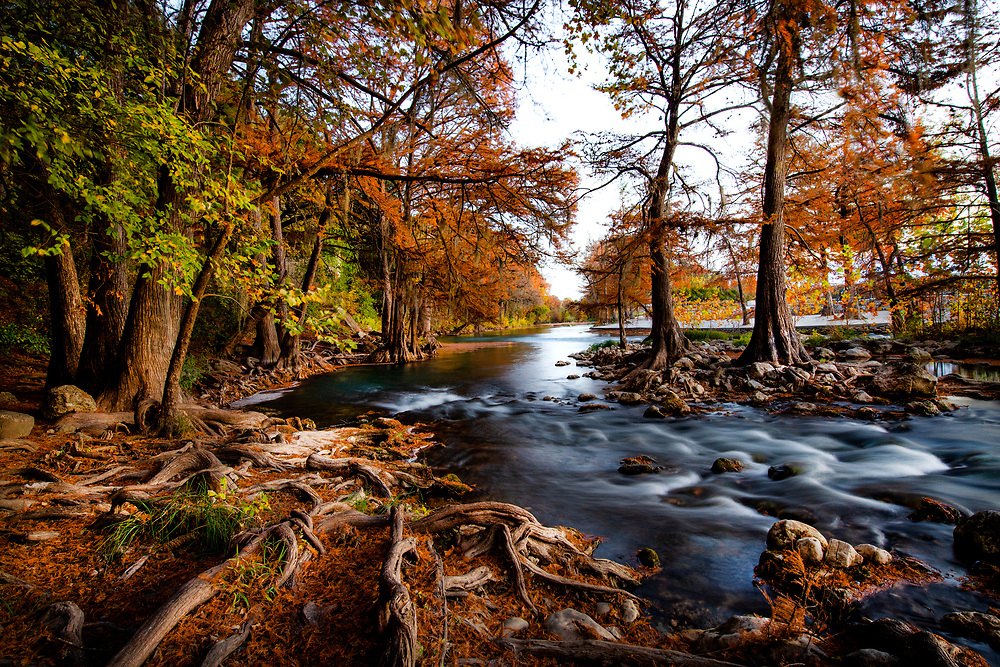 Autumn cedar trees, New Braunfels, Texas. <br /> Double spread, October 2020, Texas Highways Magazine