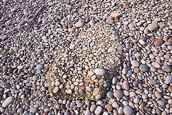 A lump of conglomerate with embedded stones sits on a pebbly beach on Macleay Island on the Kimberley coast.